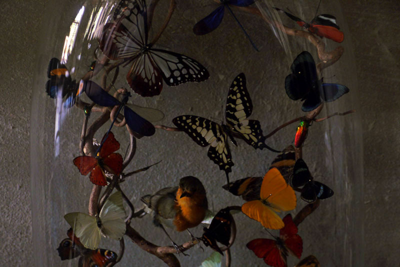 Glass Dome with Butterflies
